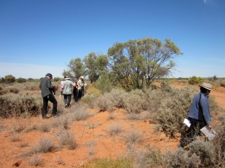Looking for the right plants, Kinchega National Park (Photo copyright: Anne Lawson 2012)