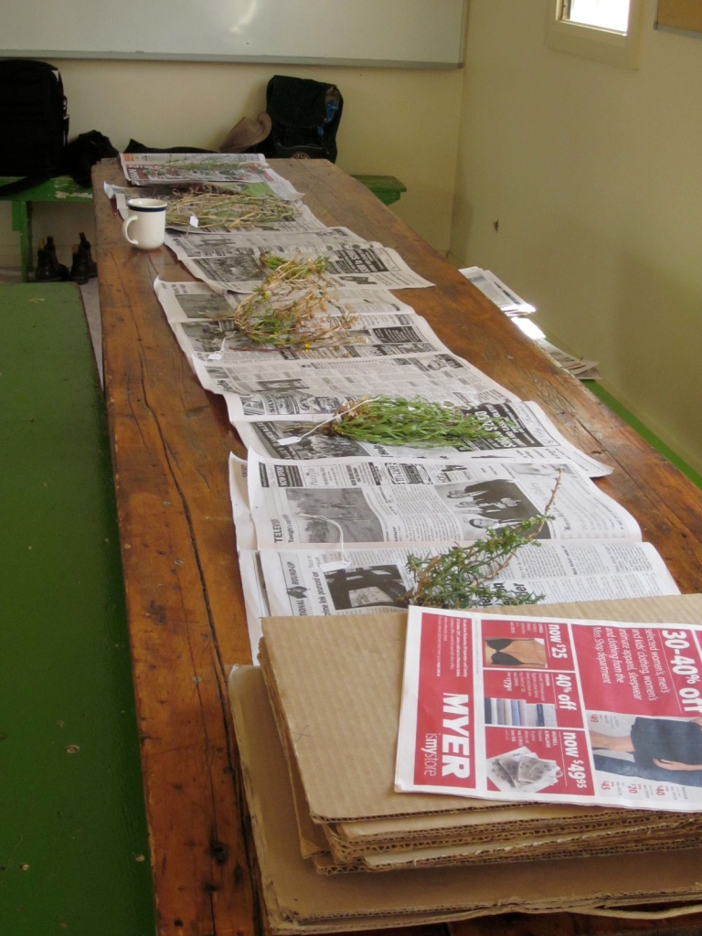 Collected specimens, ready to be pressed and stored