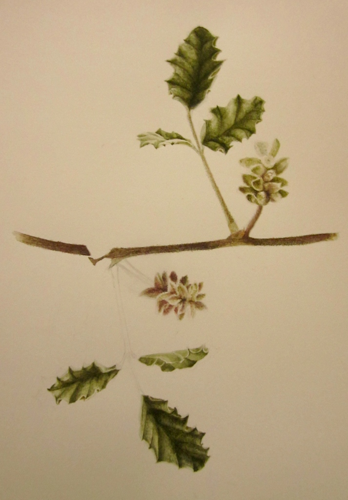 The top leaf and inflorescence is finished, the bottom is waiting.