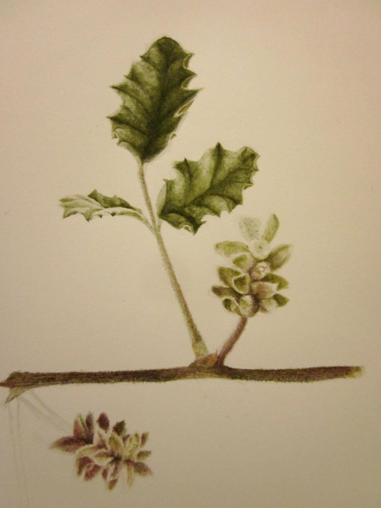 Finished leaf and inflorescence