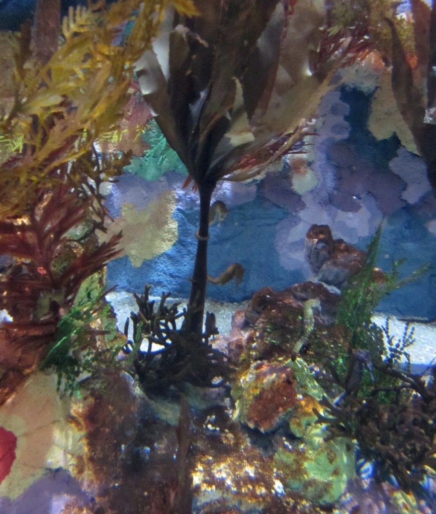They might be hard to see, but there are at least five seahorses in this photo!
