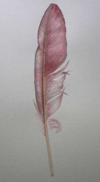 Feather using a wash of Australian grey, permanent rose and viridian green. (Photo and art work copyright Anne Lawson 2013)