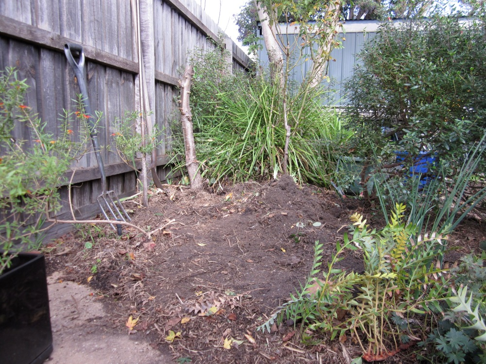 The garden bed that is in the process of ungrowing. (Photo copyright: Anne Lawson, 2013
