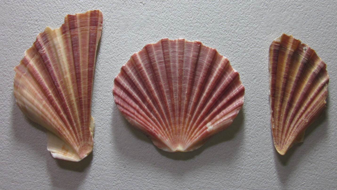 Shell paintings for the exhibition | Anne Lawson