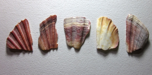 The set up of the second painting, scallop fragments. (Photo copyright: Anne Lawson, 2013)