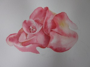"""My """"rose bud""""!! (Image and photo copyright: Anne Lawson 2014)"""
