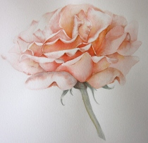 The finished rose -- almost Just Joey! (Photo and image copyright: Anne Lawson, 2014)