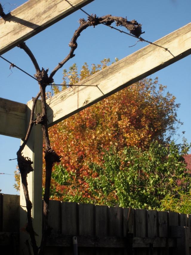 How does my garden grow... early Autumn?  (Part 3)