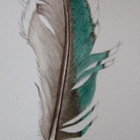 Vivid green feather (image and photo copyright, Anne Lawson 2014)