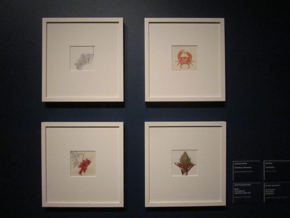 Top, L to R: Amanda Ahmed, Mali Moir Bottom, L to R: John Pastoriza~Pinol, Sandra Severgnini