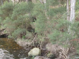 The stream (Photo copyright: Anne Lawson, 2015)