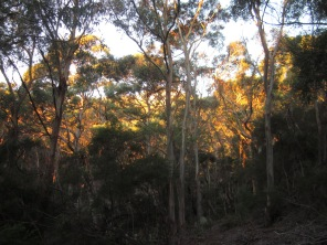 The protective gum trees of the walk. (Photo copyright: Anne Lawson, 2015)