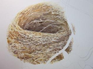Bird nest in progress