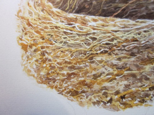 Detail of nest