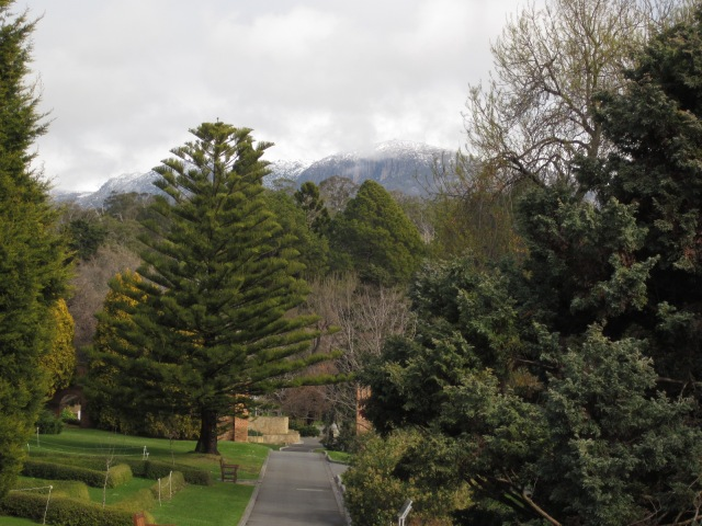 Snowy Mt Wellington, from the Tasmanian Botanic Gardens (Photo copyright: Anne Lawson, 2015)