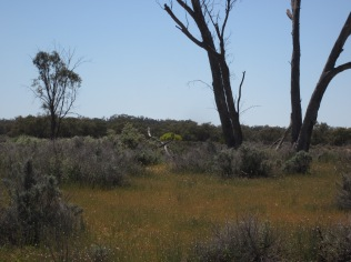 The Old Homestead area, Kinchega National Park (Photo copyright: Anne Lawson 2011)