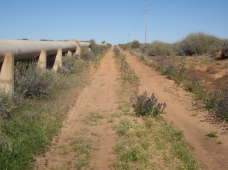 Along the pipeline, between Menindee and Copi Hollow (Photo copyright: Anne Lawson 2015)