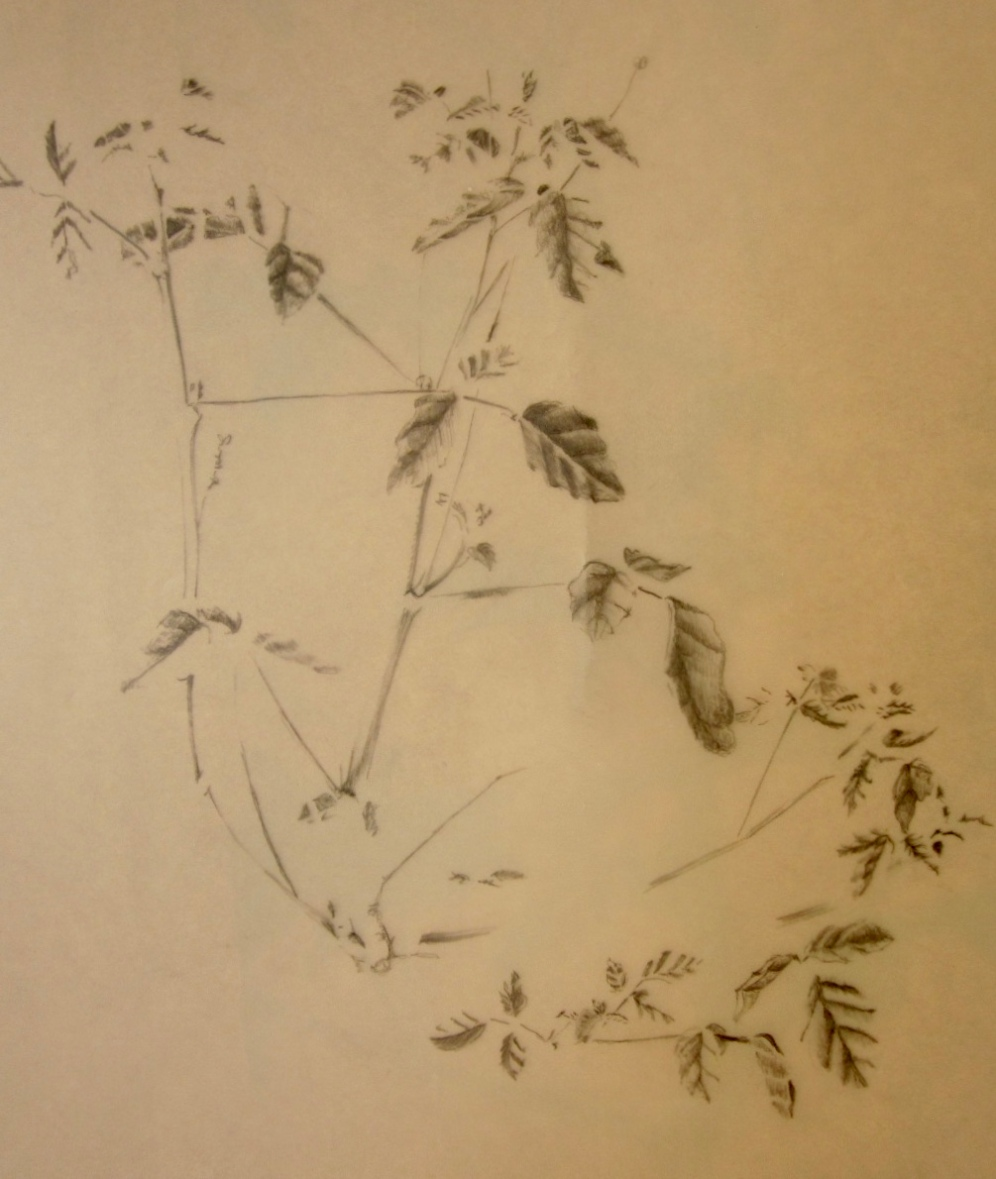 Tonal drawing on tracing paper