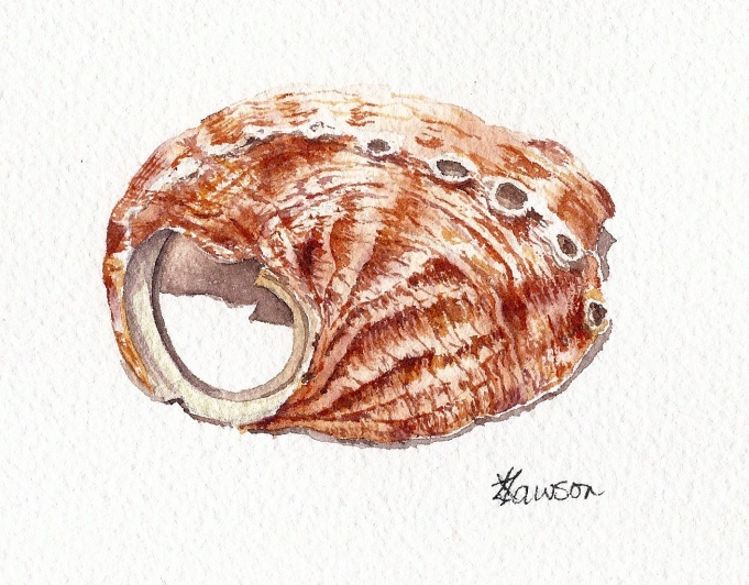 Shell (Image and photo copyright: Anne Lawson 2015)