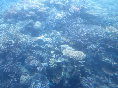 Coral on the Great Barrier Reef (Photo copyright: Anne Lawson, 2016)